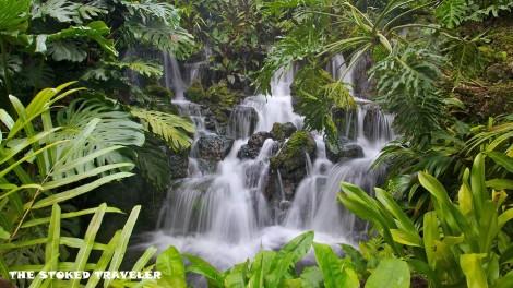 Singapore-Botanic-Gardens-39501